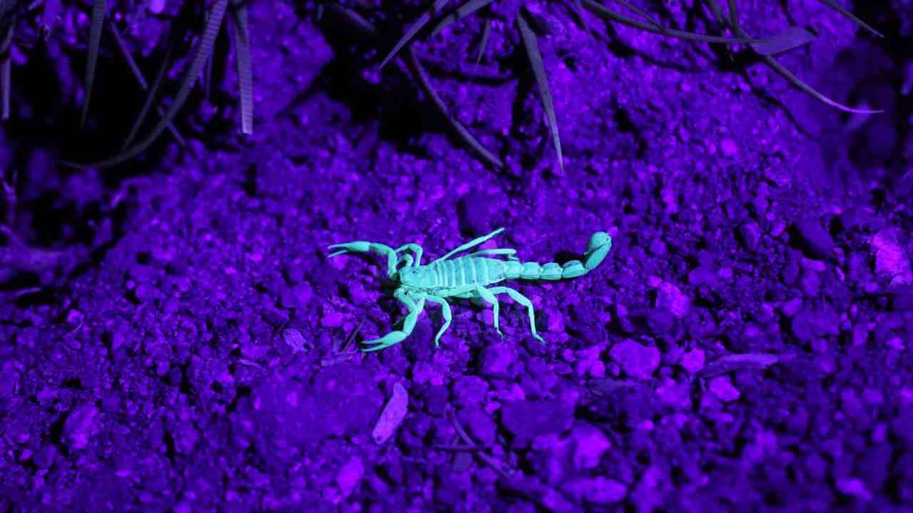 Colori ultravioletti