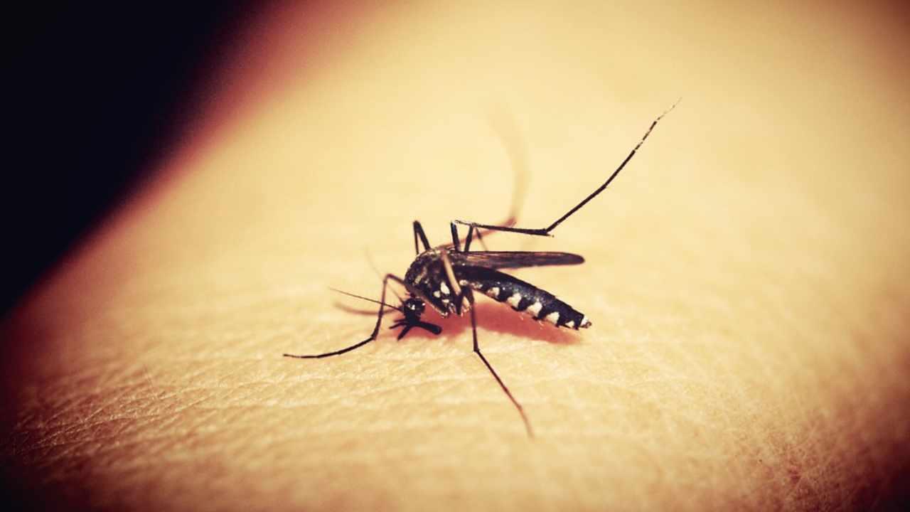 Zanzara e Malaria