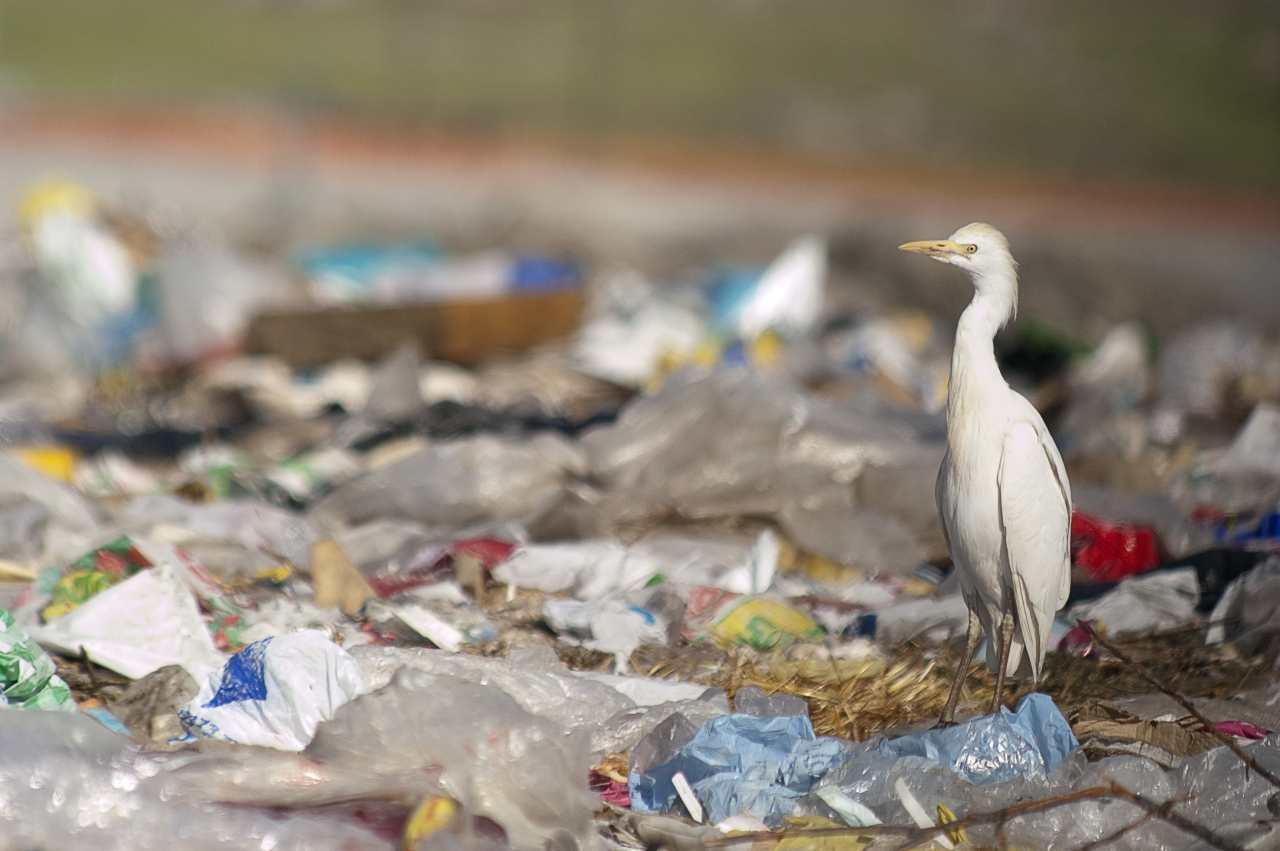 L'inquinamento da plastica sta arrivando all'atmosfera terrestre (Adobe Stock)