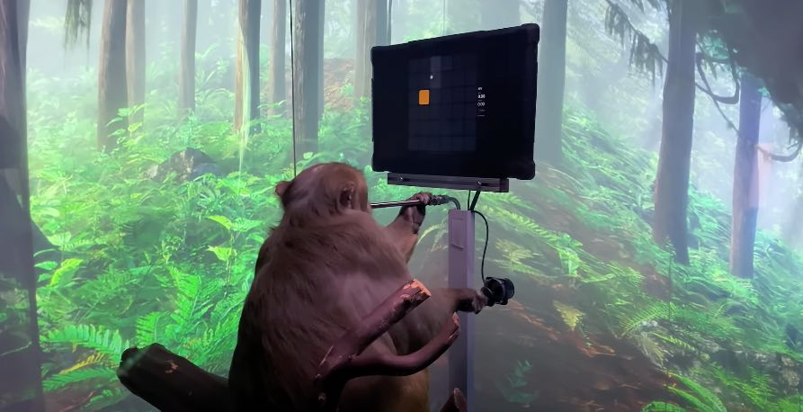 Neuralink permette al macaco Pager di giocare a Pong con la mente |  guarda il video incredibile!