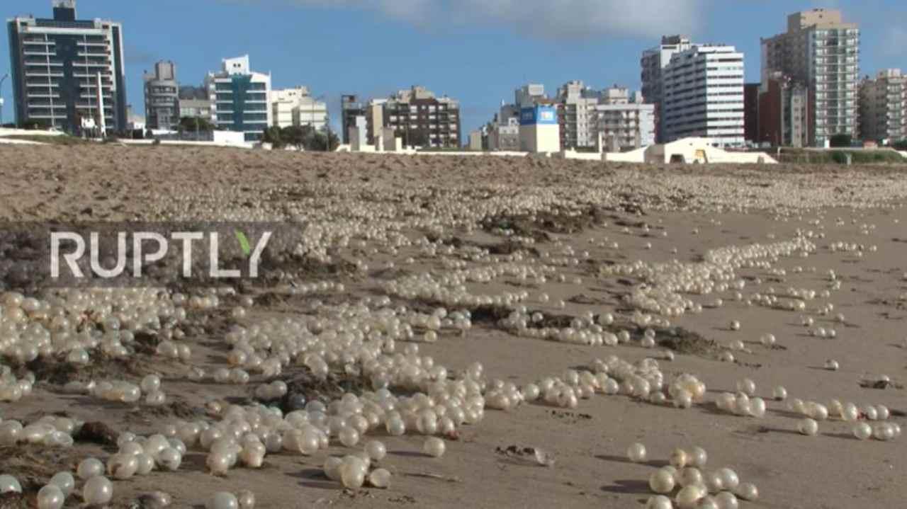 Sfere bianche in spiaggia (Screen da Youtube)