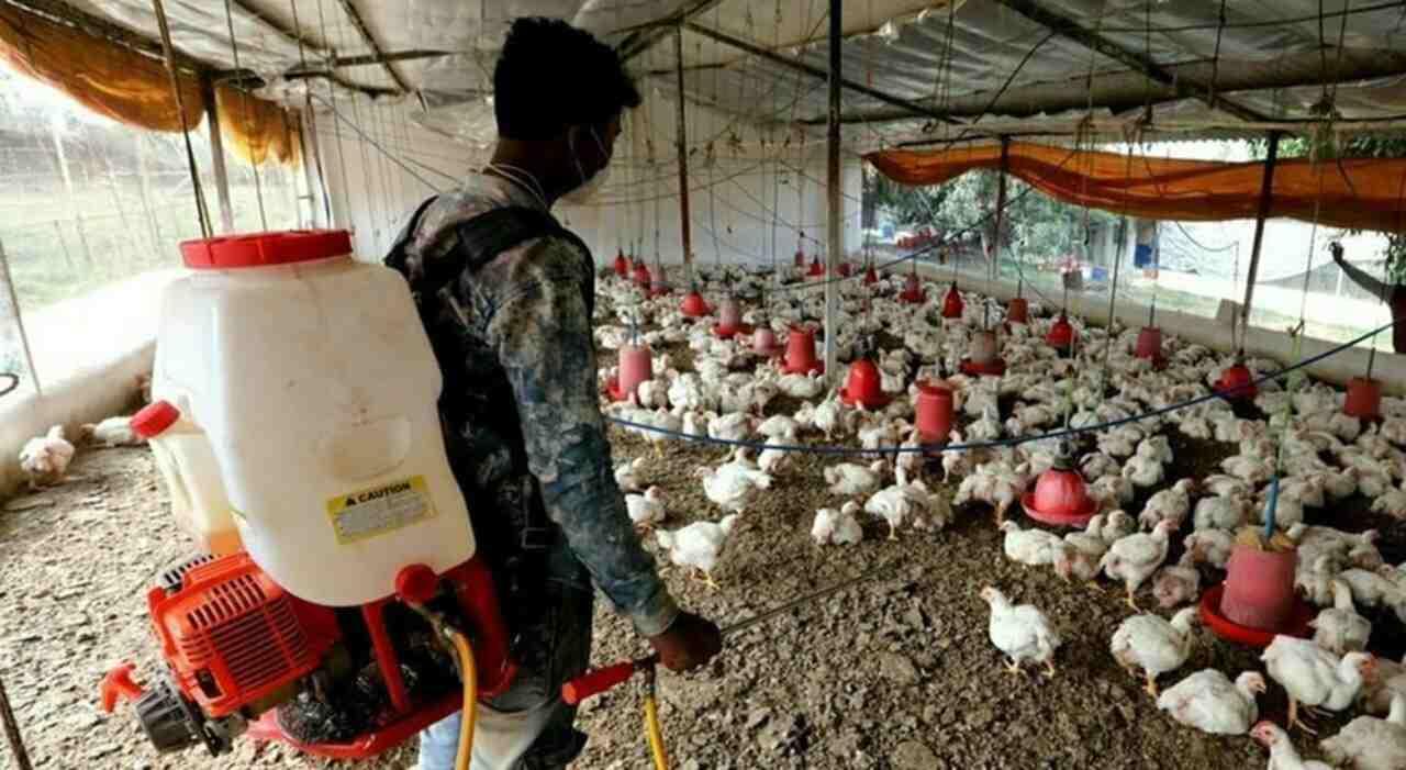 Influenza aviaria in Cina (Foto Today)
