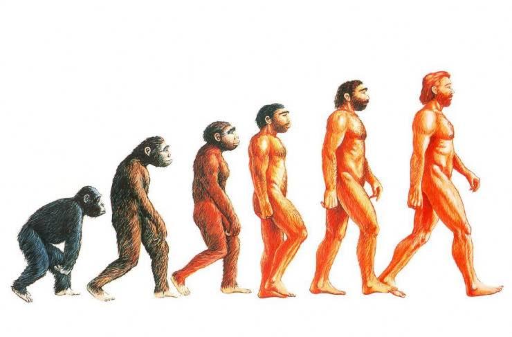 Riscritta la storia dell'evoluzione