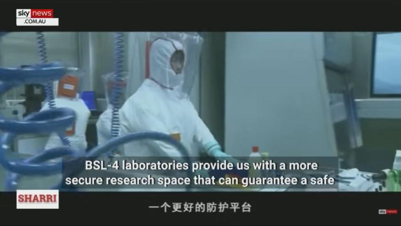 Il video dei pipistrelli a Wuhan (Foto SkyNews Australia)
