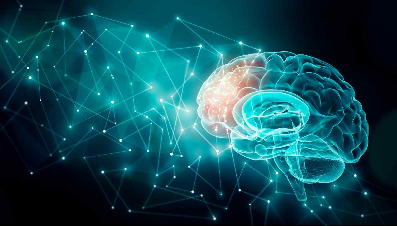 Cervello umano (Adobe Stock)