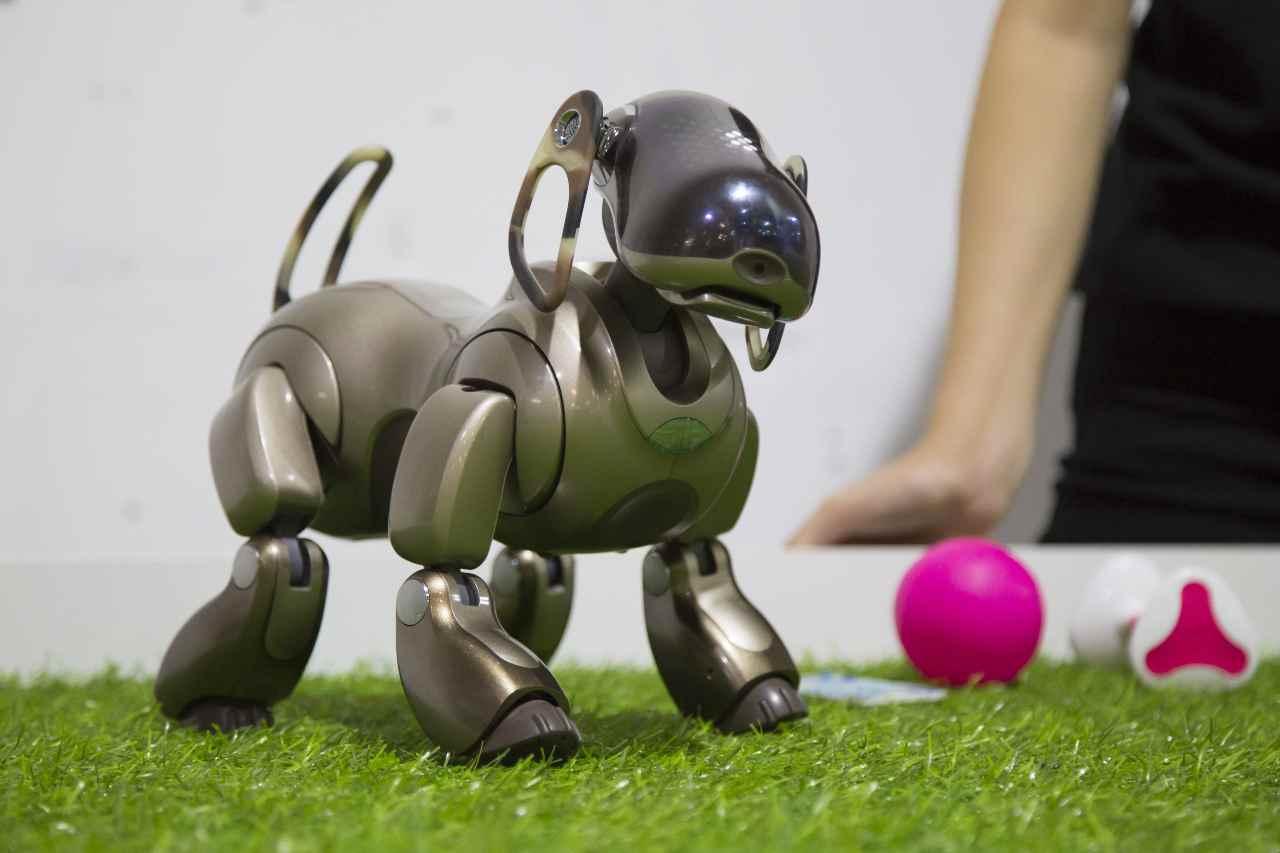 Cane robotico (Adobe Stock)